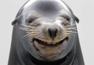 funny-seal-face-picture